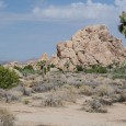 Back in the good old days when you could visit a US National Park, Joshua Tree in the southern California desert offered a look at a variety of desert climates and terrain