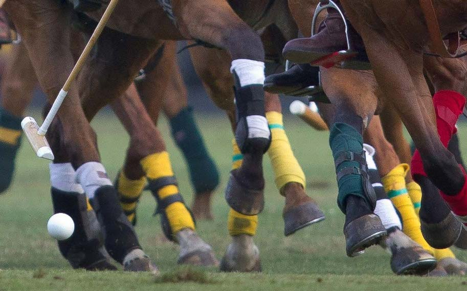 Photo of polo horses at Sarasota Polo Club in Florida